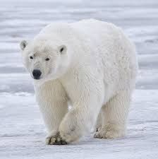 Most people associate Sweden with cold, winter, snow, and polar bears. However, we do have summer just like the rest of Europe, and we do not have polar bears walking around the streets.