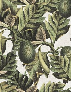Mind The Gap Wallpaper Collection - Exotic Fruit 1