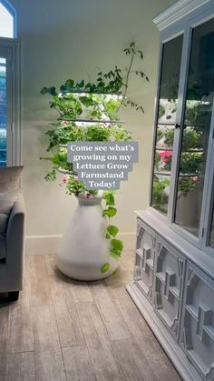 Indoor Garden, Garden Plants, Indoor Plants, House Plants Decor, Plant Decor, Dream Garden, Home And Garden, House Plant Care, Aesthetic Room Decor