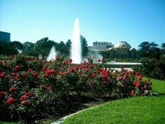 Exposition Park Rose Garden : Curbed LA