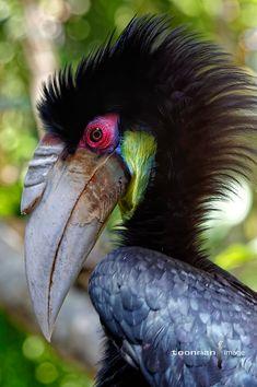 Hornbill – About Eye Makeup Pretty Birds, Beautiful Birds, Animals Beautiful, Cute Animals, Small Animals, Rare Birds, Exotic Birds, Tropical Birds, Colorful Birds