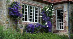 Lee Ann Torrans Gardening | Texas Perennial Garden – Top Ten Summer Perennials | http://leeanntorrans.com