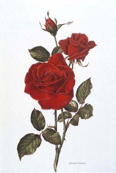 a sketched rose
