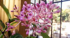 Le damos la bienvenida al mes de las flores! Nuestro jardín nos sorprendió con esta linda orquídea.