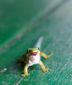 this little guy is just tooooo cute the geico insurance