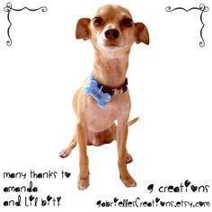 Blue Paws Bone Dog Tag  Male Dog Collar by GabriellesCreations