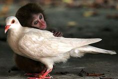 We are People who need to love, because Love is the soul's life.  Love is simply creation's greatest joy.    –Hafiz