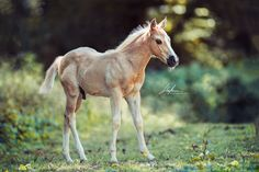 Some Beautiful Images, Beautiful Horses, Equine Photography, Photography Photos, Horse Photos, Handsome, Portrait, Cute, Pictures