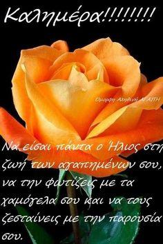 Good Morning, Spirituality, Rose, Flowers, Plants, Buen Dia, Pink, Bonjour, Spiritual