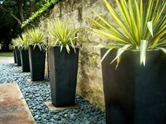 A series of identical planters, sleek and smooth, forms a regiment along a beautiful wall. Each planter is topped with a highly contrasting variegated yucca to create a powerful contemporary scene.