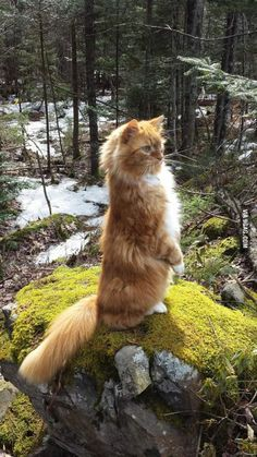 My cat, fearlessly scouting the woods