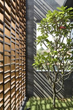 Gallery of Viewing Back House / HYLA Architects - 9 Front Yard Garden Design, Yard Design, House Design, Facade Architecture, Landscape Architecture, Landscape Design Program, Landscape Designs, House Extension Design, Home Building Design