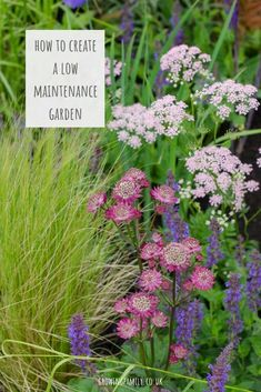 Finding time to maintain a garden all year round can be tricky. Check out these quick and easy ways to create a low maintenance garden for the whole family. Layout Design, Design Ideas, Organic Gardening, Gardening Tips, Plant Cuttings, Low Maintenance Garden, Crepe Paper Flowers, Beautiful Flowers Garden, Green Lawn