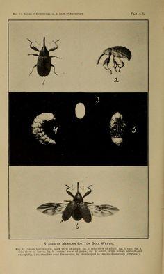 no. 49-51 1904-05 - Bulletin / - Biodiversity Heritage Library