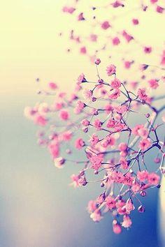 Achtergrond bloem / roze