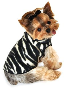 I See Spot Zebra Pet Dog Fleece Pullover Sweater in Black and White >>> Review more details here : Dog sweaters
