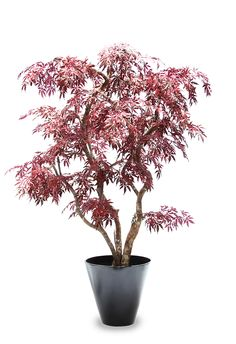 Acer Red