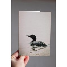 Minnesota Loon  This image is a big Minnesota favorite. The Common Loon is our state bird that graces the lakes of Minnesota all summer long. Available in multiple pack amounts, this card is 4x5.5, printed on archival, fine art Art Matte cardstock, very soft and smooth; a true experience to open. Each card is blank on the inside, and comes with white envelopes. A standard stamp will work to mail for this size card in the USA.  Make sure to explore my shop - I have many cards available…