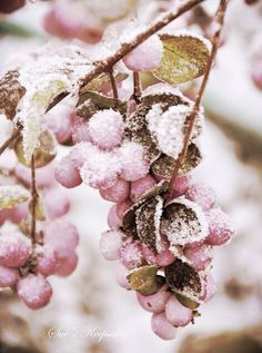 Winter is coming !!! ... Winter Pink