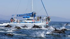 Captain Dave's unique whale watching trips out of Dana Point. Captain Dave uses specially designed catamarans with viewing pods. Check for coupons & Offers
