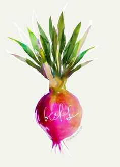Beets Illustration © Marta Spendowska