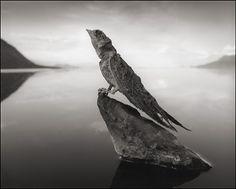 Nick Brandt Calcified Swallow, Lake Natron, 2012
