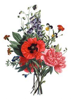 vintage flower illustration - Pesquisa Google