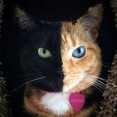 I love this cat.