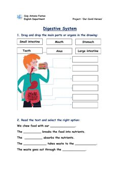 English Worksheets For Kids, 2nd Grade Worksheets, Science Worksheets, Human Muscle Anatomy, Human Anatomy, Animal Nutrition, School Subjects, Anatomy And Physiology, English Class