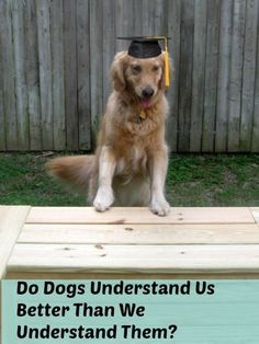 Who's really smarter? After all, don't dogs understand us better than we understand them?