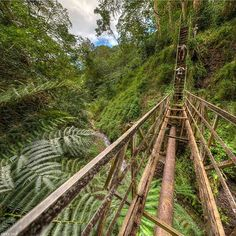 Welcome to the jungle! Maunawili Hidden Bridge. O'ahu, Hawaii