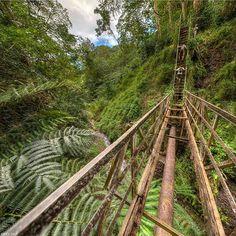 Welcome to the jungle! Maunawili Hidden Bridge. O'ahu, Hawaii ...