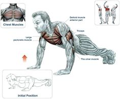 The push-up is the classic bodyweight exercise for the upper body. It will help you develop strength and endurance, build upper body muscle, fortify your joints and better coordinate the work of the muscles in your upper body, core and legs. There is no other exercise that can be compared to the push-up when talking …