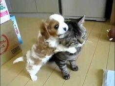 me=the annoying puppy | bf=the patient cat