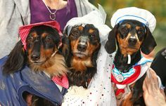 The event also raised money for Dachshund Rescue Australia.