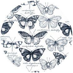 Sarah Watson for Cloud 9, Biology, Fauna