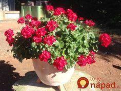 Archívy Dom & záhrada - Page 5 of 265 - To je nápad! Edible Garden, Plants, Flowers, Garden