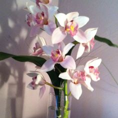 Cut orchids can last for weeks sometimes.