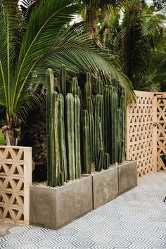 Natur als Deko This Organic Chic Acre Baja Wedding Showcases Some Seriously Unique Bride and Groom S Backyard Landscaping, Backyard Ideas, Fence Ideas, High Desert Landscaping, Pathway Ideas, Desert Backyard, Tropical Backyard, Diy Fence, Modern Landscaping