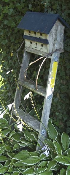 on an old ladder. Maybe not a bird house, but put little food troughs on each step? Old Ladder, Leaning Ladder, Birds And The Bees, Bird Cages, Garden Crafts, Little Houses, Yard Art, Bird Feathers, Beautiful Birds