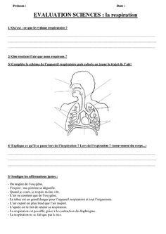 Respiration - Ce2 - Cm1 - Cm2 - Evaluation - Pass Education