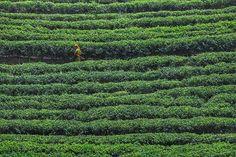 #Mujer que cada día trabaja rodeada de #verde y no es esperanza. Tomando un #té reflexiono sobre las duras condiciones de las trabajadoras de estos campos ya que leí hace poco que muchas de ellas se unieron y se manifestaron para luchar por unas mejores condiciones. No lo lograron pero seguro que esos días si trabajaron entre verde esperanza.  #srilanka #green #woman #womenrights #viajarordie #travelbloggers #teasrilanka #travelgirl #plantation #plantationtea #traveladict #igerssrilanka #tea…