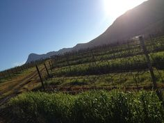 Seven Springs Vineyard, South Africa South African Wine, Seven Springs, Vineyard, Mountains, Places, Nature, Travel, Outdoor, Outdoors
