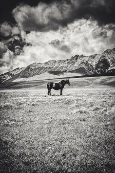 "Saatchi Art Artist Alessandro Passerini; Photography, ""Stand Alone - Limited Edition 1 of 9"" #art"