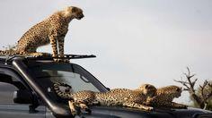 Wildlife at Naboisho Camp
