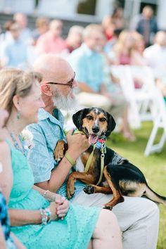 Wedding dog cuteness