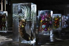 This Is What Happens When You Encase Flowers In Giant Cubes Of Ice