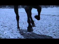 Beautiful video from Longines. #Horseracing #horses. See more great horse racing advertisements at http://www.racingfuture.com/content/horse-racing-marketing-commercials-around-world