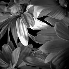 'lighting' by cherylt | Foap photo