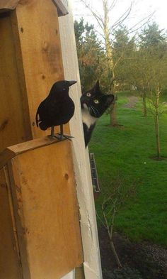 Funny pictures about Curious Neighbor Kitty. Oh, and cool pics about Curious Neighbor Kitty. Also, Curious Neighbor Kitty photos. I Love Cats, Crazy Cats, Cool Cats, Animals And Pets, Funny Animals, Cute Animals, Cute Kittens, Cats And Kittens, Animal Pictures